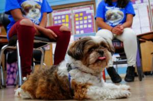 Comfort Dog in Classroom